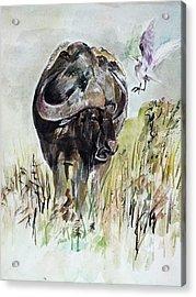 Buffalo Acrylic Print by Khalid Saeed