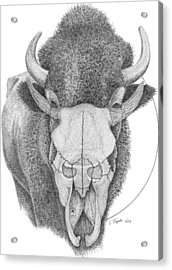 Buffalo Acrylic Print by Lawrence Tripoli