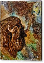 Buffalo Acrylic Print by Maris Sherwood