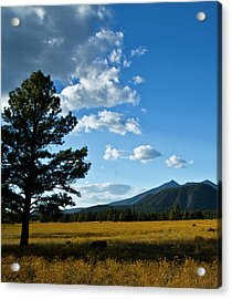 Acrylic Print featuring the photograph Buffalo Park 3 by Tom Kelly