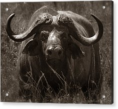 Buffalo Road Block Acrylic Print