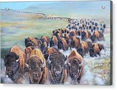 Buffalo Stampede Acrylic Print by Karen Cade