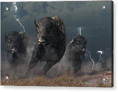 Buffalo Storm Acrylic Print