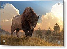 Buffalo Sunset Acrylic Print