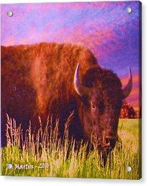 Buffalo Sunset Acrylic Print by Roberta Martin