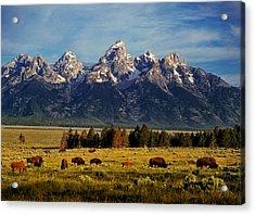 Buffalo Under Tetons 2 Acrylic Print by Leland D Howard