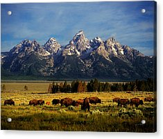 Buffalo Under Tetons Acrylic Print