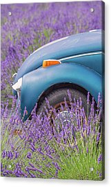 Acrylic Print featuring the photograph Bug In Lavender Field by Patricia Davidson