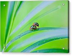 Bug Mating Acrylic Print