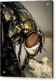 Bug On A Bug Acrylic Print