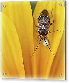 Acrylic Print featuring the photograph Bug On Flower by Rick Hartigan