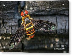 Bug With Red Eyes Acrylic Print
