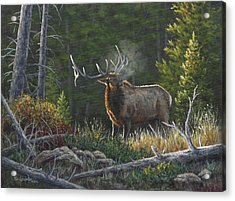 Acrylic Print featuring the painting Bugling Bull by Kim Lockman