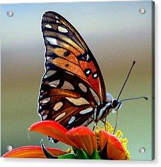 Bugs Eye View Acrylic Print by Dottie Dees