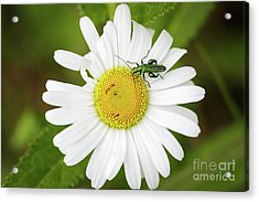 Acrylic Print featuring the photograph Bugs Life by Paul Farnfield