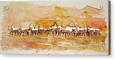 Buharan Oryx Acrylic Print by Mike Shepley DA Edin
