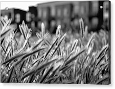 Buildings Are Growing Behind The Grass Acrylic Print by Alessandra RC