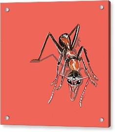 Bull Ant Acrylic Print by Jude Labuszewski