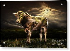 Bull Collection Acrylic Print
