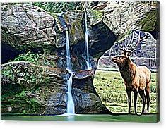 Bull Elk By A Waterfall Acrylic Print