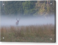 Acrylic Print featuring the photograph Bull Elk Disappearing In Fog - September 30 2016 by D K Wall