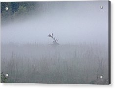 Acrylic Print featuring the photograph Bull Elk In Fog - September 30, 2016 by D K Wall