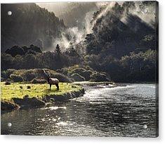 Bull Elk In Wilderness Acrylic Print