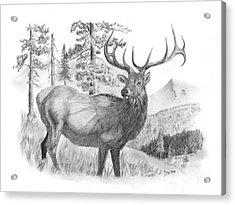 Bull Elk Acrylic Print by Russ  Smith
