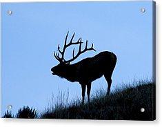 Bull Elk Silhouette Acrylic Print