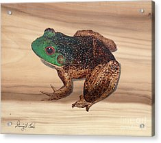 Bull Frog Art Work Acrylic Print