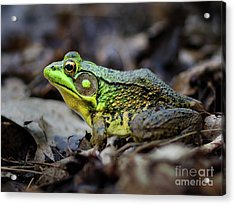 Acrylic Print featuring the photograph Bull Frog by Mark Miller