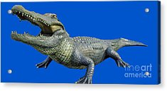 Bull Gator Transparent For T Shirts Acrylic Print