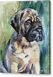 Bull Mastiff Acrylic Print