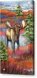 Bull Moose In Fall Acrylic Print by Tracey Hunnewell