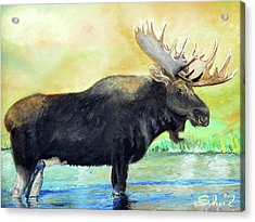Bull Moose In Mid Stream Acrylic Print