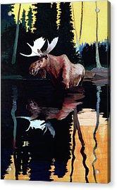 Bull Moose Acrylic Print by Robert Wesley Amick