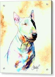 Bull Terrier Dog Portrait Acrylic Print