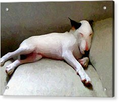 Bull Terrier Sleeping Acrylic Print by Michael Tompsett