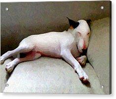 Bull Terrier Sleeping Acrylic Print