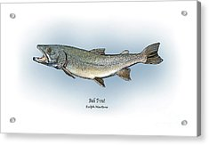 Bull Trout Acrylic Print by Ralph Martens