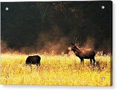 Bull With His Girl Acrylic Print