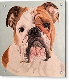 Bulldog Beauty Acrylic Print