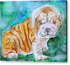 Acrylic Print featuring the painting Bulldog Cub  - Watercolor Portrait by Fabrizio Cassetta