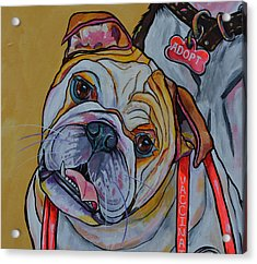 Acrylic Print featuring the painting Bulldog by Patti Schermerhorn