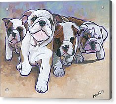 Bulldog Puppies Acrylic Print by Nadi Spencer