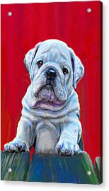 Acrylic Print featuring the digital art Bulldog Puppy On Red by Jane Schnetlage