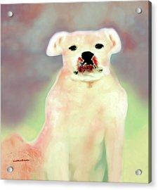 Bulldog Rana Art 43 Acrylic Print