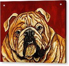 Bulldog Acrylic Print by Sherry Dole