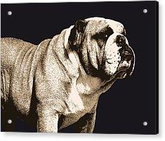 Bulldog Spirit Acrylic Print by Michael Tompsett