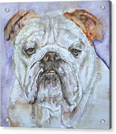 Acrylic Print featuring the painting Bulldog - Watercolor Portrait.5 by Fabrizio Cassetta